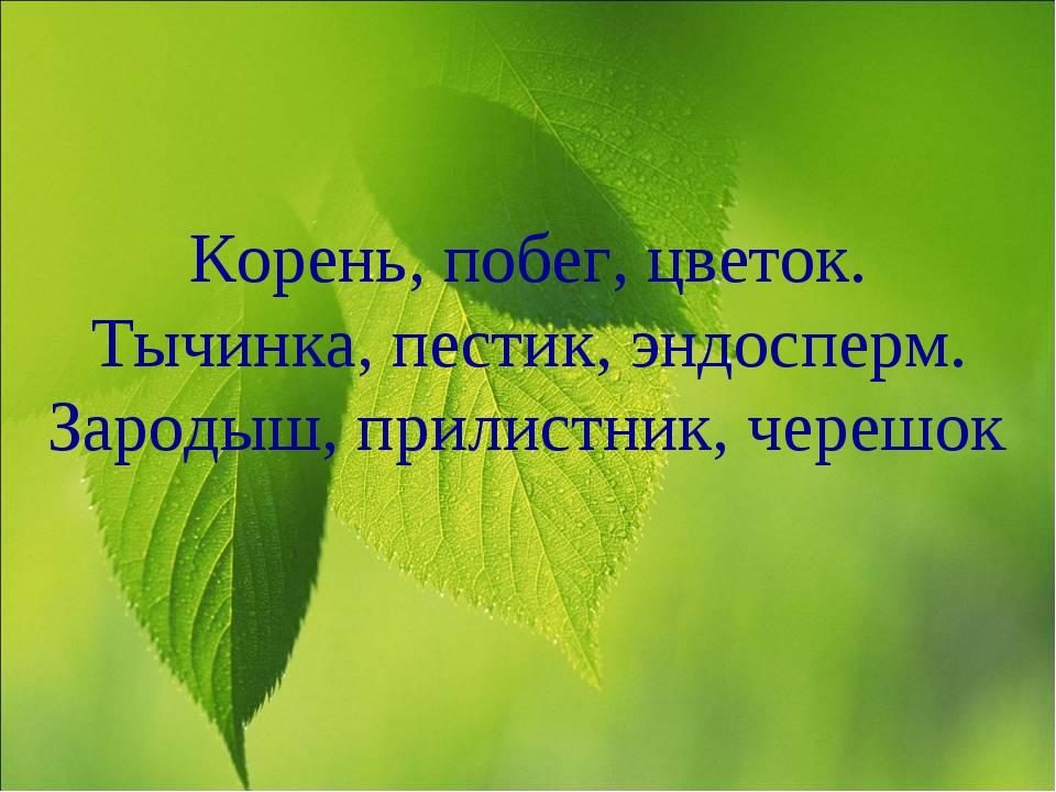 Корень, побег, цветок. Тычинка, пестик, эндосперм. Зародыш, прилистник, череш...