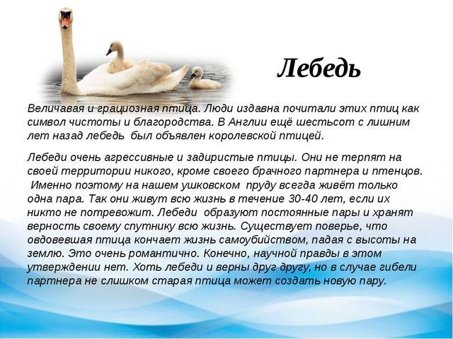 Лебедь Величавая и грациозная птица. Люди издавна почитали этих птиц как симв...