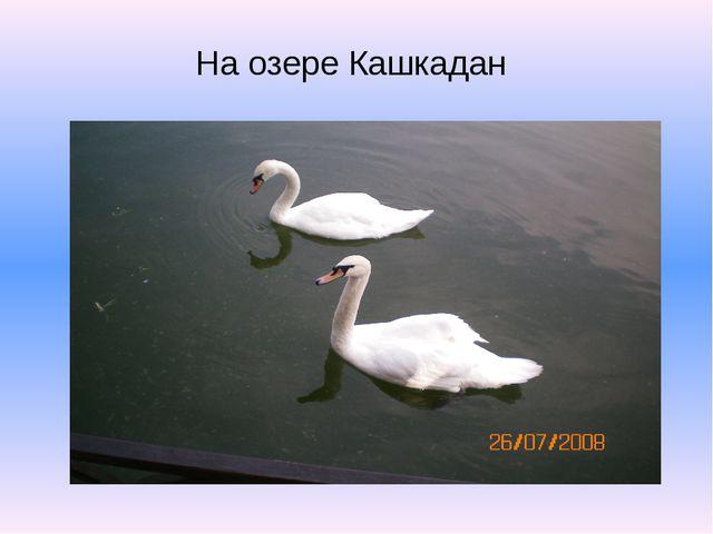На озере Кашкадан