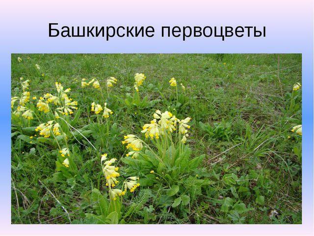 Башкирские первоцветы