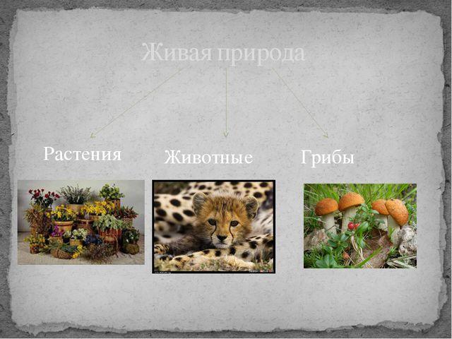 Живая природа Растения Животные Грибы