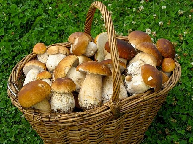 Техника грибной безопасности