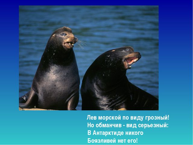 Лев морской по виду грозный! Но обманчив - вид серьезный: В Антарктиде нико...