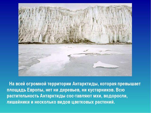 На всей огромной территории Антарктиды, которая превышает площадь Европы, не...