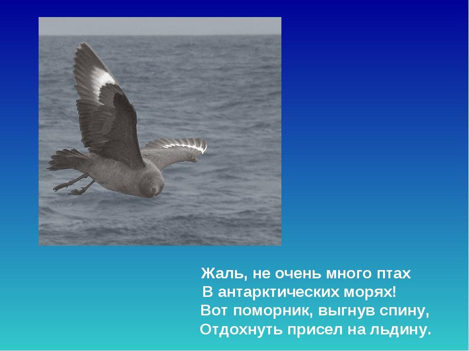 Жаль, не очень много птах В антарктических морях! Вот поморник, выгнув спин...