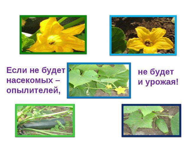 Если не будет насекомых – опылителей, не будет и урожая!