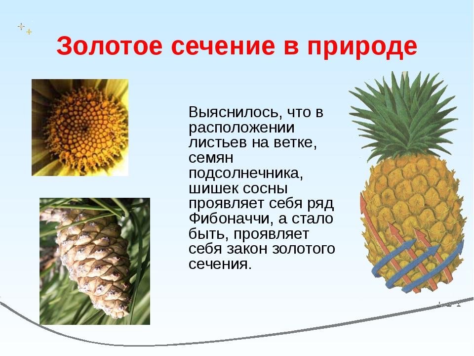 Золотое сечение в природе Выяснилось, что в расположении листьев на ветке, се...