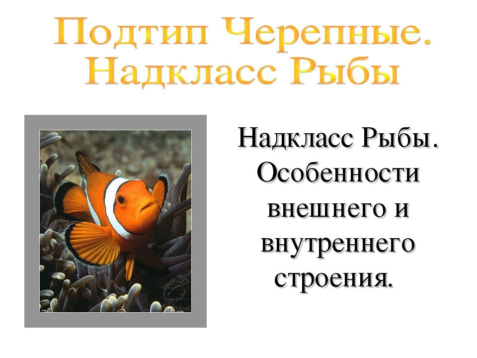Надкласс Рыбы. Особенности внешнего и внутреннего строения.