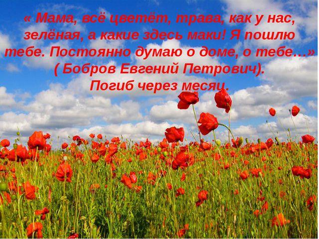 « Мама, всё цветёт, трава, как у нас, зелёная, а какие здесь маки! Я пошлю т...