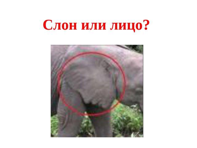 Слон или лицо?