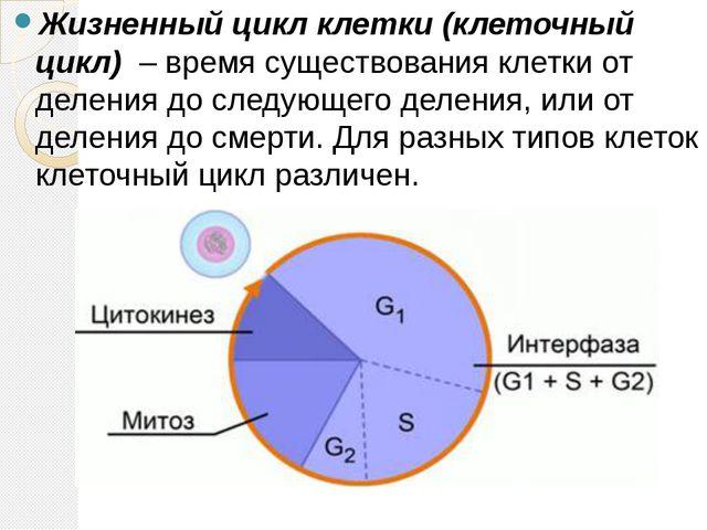 Биология 10 класс учебник деление клеток