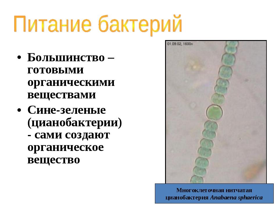 Большинство – готовыми органическими веществами Сине-зеленые (цианобактерии)...