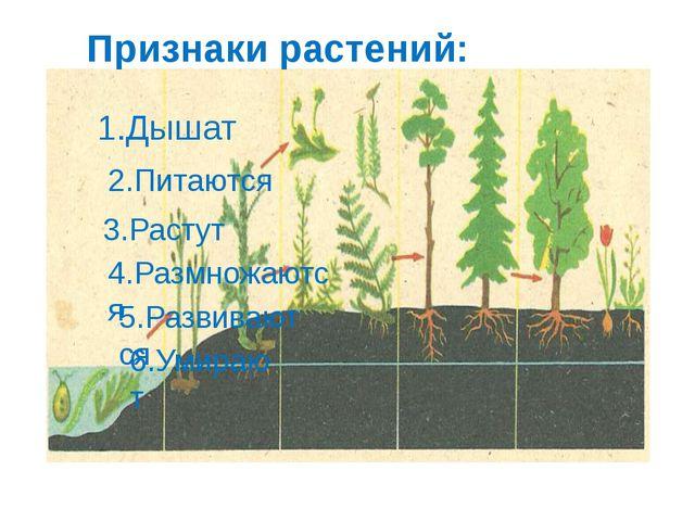 Признаки растений: 1.Дышат 2.Питаются 3.Растут 4.Размножаются 5.Развиваются...