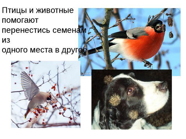 Птицы и животные помогают перенестись семенам из одного места в другое.