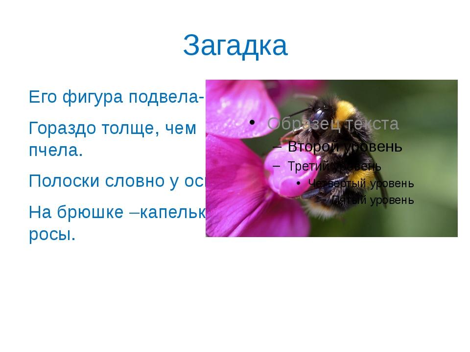 Загадка Его фигура подвела- Гораздо толще, чем пчела. Полоски словно у осы, Н...