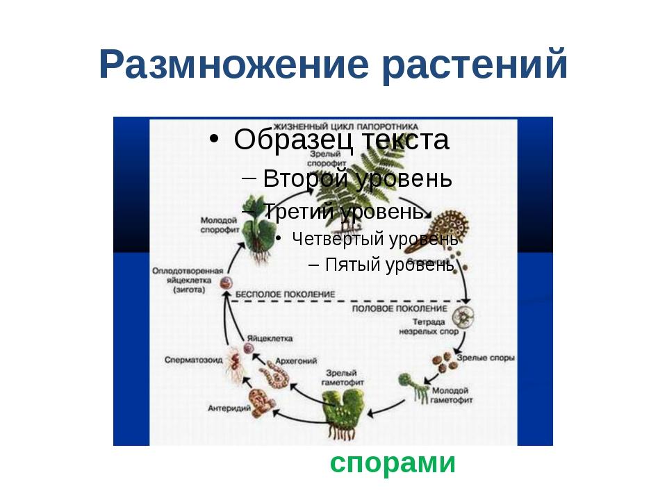 Размножение растений спорами