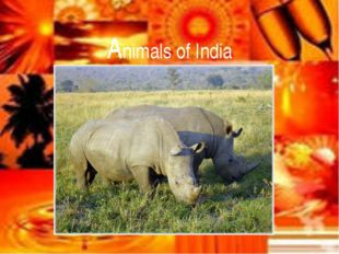 Animals of India