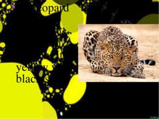 the leopard is a very quick. It is always in motion. It is yellow with black