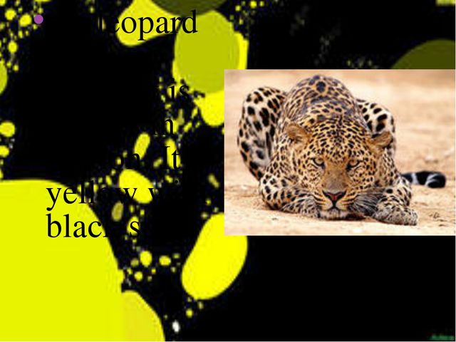 the leopard is a very quick. It is always in motion. It is yellow with black...