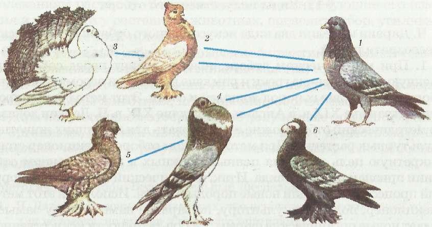 http://bioslogos.ru/i/16.jpg
