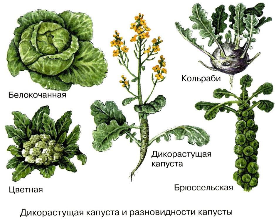 http://reftrend.ru/files/149/39bd49e9ef09cbadab790e281401f659.html_files/52.jpg