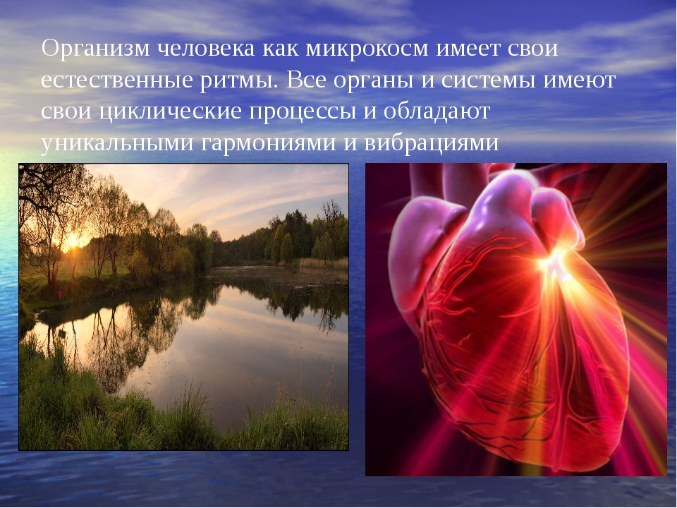 Организм человека как микрокосм имеет свои естественные ритмы. Все органы и с...