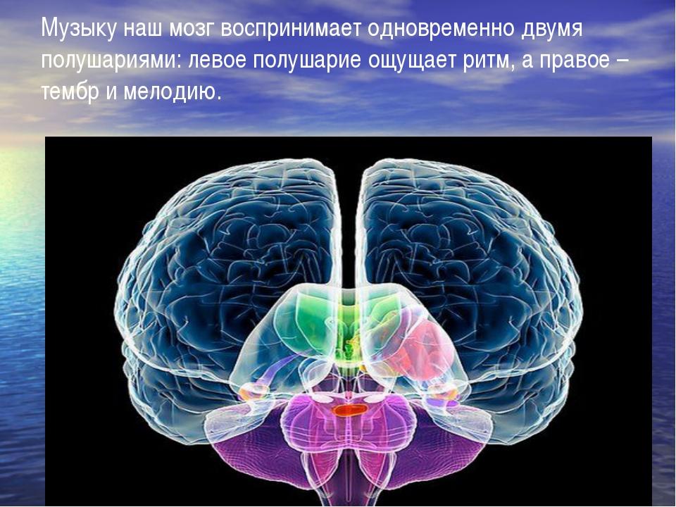 Музыку наш мозг воспринимает одновременно двумя полушариями: левое полушарие...