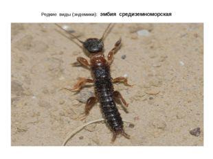 Редкие виды (эндемики): эмбия средиземноморская