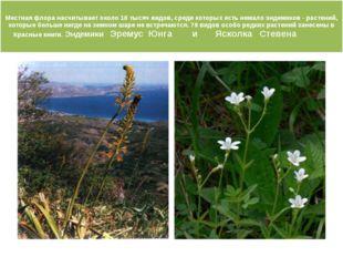 Местная флора насчитывает около 10 тысяч видов, среди которых есть немало эн
