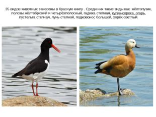 35 видов животных занесены в Красную книгу . Среди них такие виды как: жёлтоп