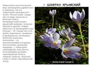 ШАФРАН КРЫМСКИЙ Животный и растительный мир заповедника удивителен и уникале