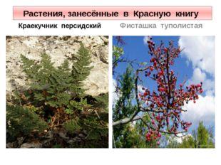 Растения, занесённые в Красную книгу Краекучник персидский Фисташка туполистая