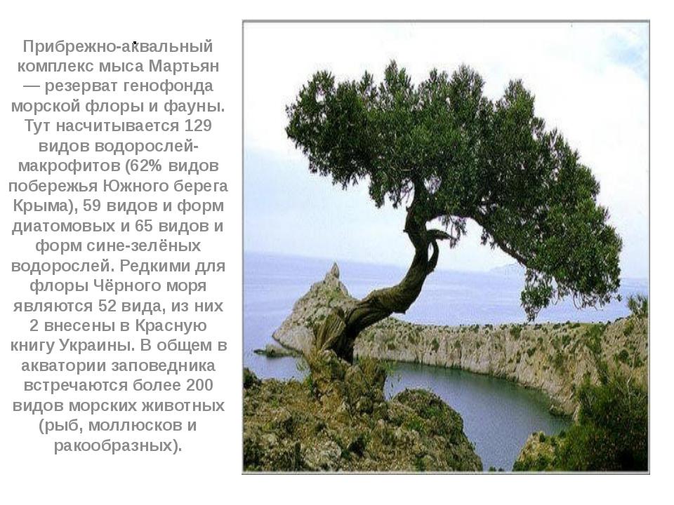 . Прибрежно-аквальный комплекс мыса Мартьян — резерват генофонда морской флор...