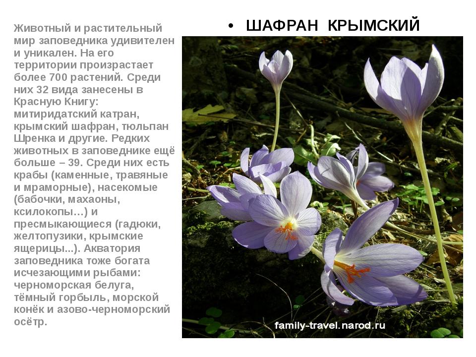 ШАФРАН КРЫМСКИЙ Животный и растительный мир заповедника удивителен и уникале...