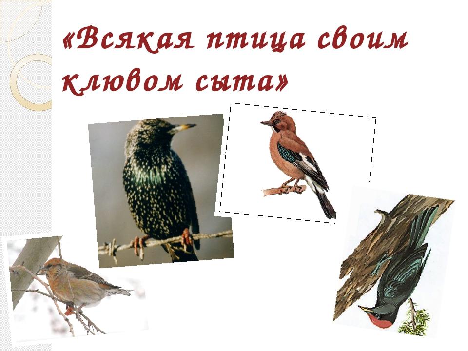 «Всякая птица своим клювом сыта»