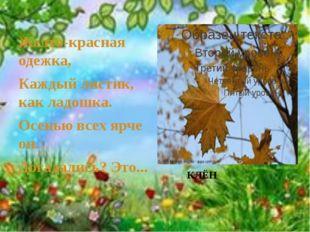 Желто-красная одежка, Каждый листик, как ладошка. Осенью всех ярче он. Догад