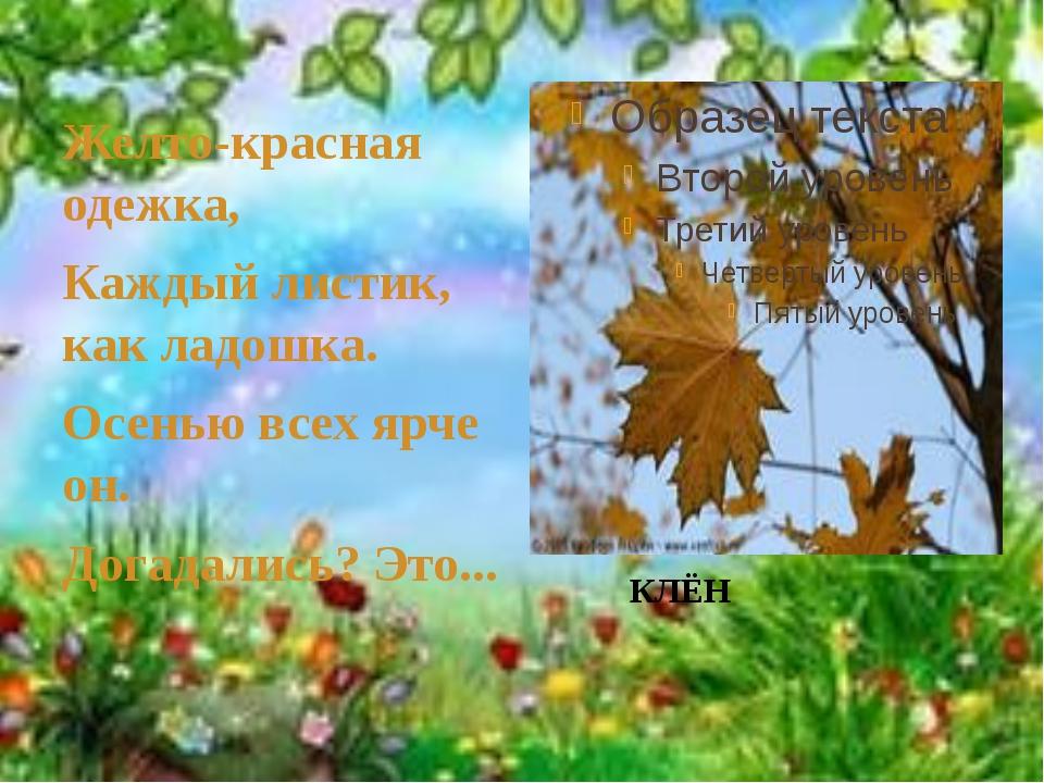 Желто-красная одежка, Каждый листик, как ладошка. Осенью всех ярче он. Догад...