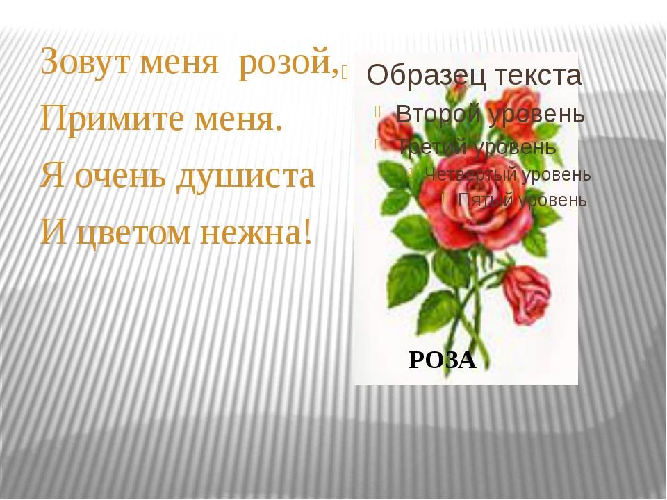 Зовут меня розой, Примите меня. Я очень душиста И цветом нежна! РОЗА
