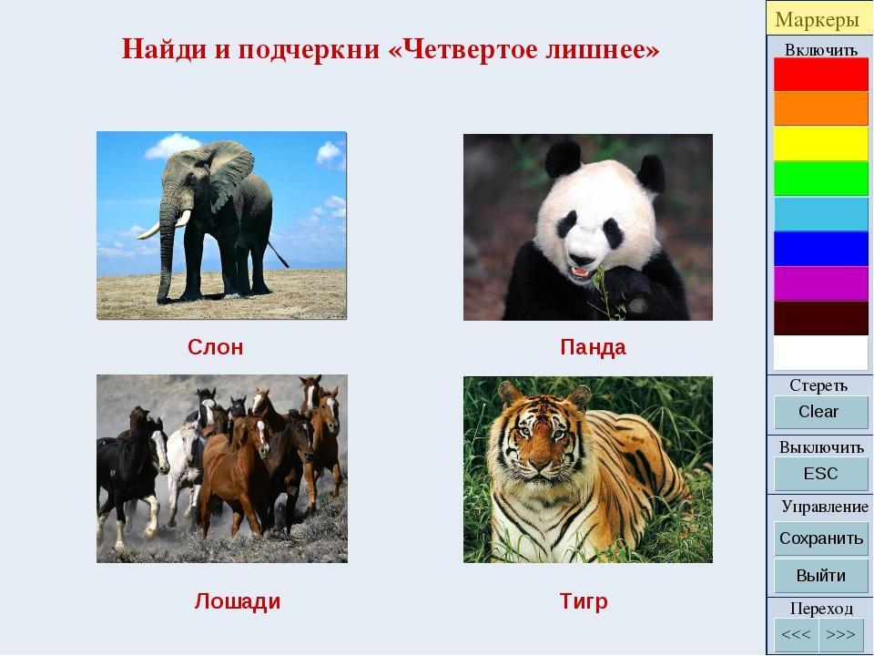 Найди и подчеркни «Четвертое лишнее» Слон Панда Лошади Тигр