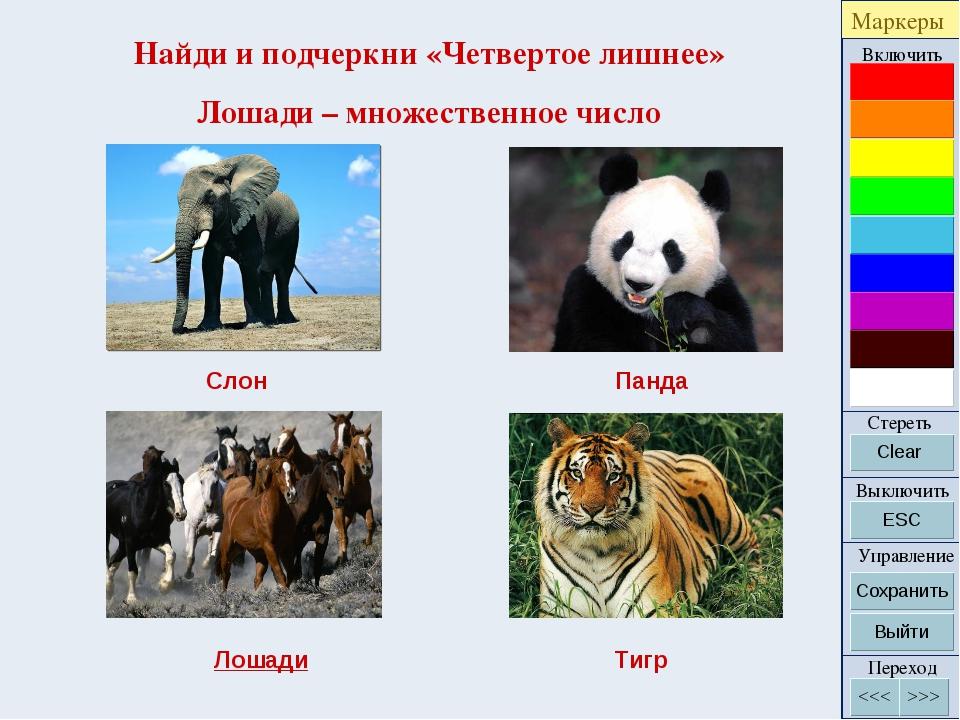 Найди и подчеркни «Четвертое лишнее» Лошади – множественное число Слон Панда...