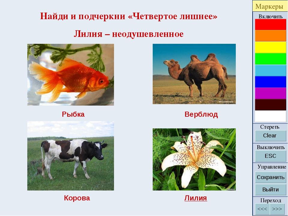 Найди и подчеркни «Четвертое лишнее» Лилия – неодушевленное Рыбка Верблюд Кор...