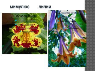 мимулюс лилии