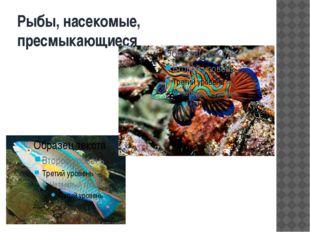 Рыбы, насекомые, пресмыкающиеся