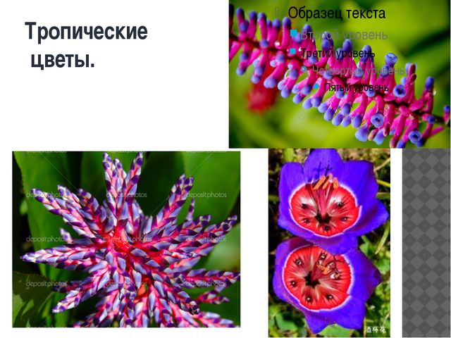Тропические цветы.