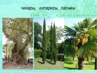 чинары, кипарисы, пальмы