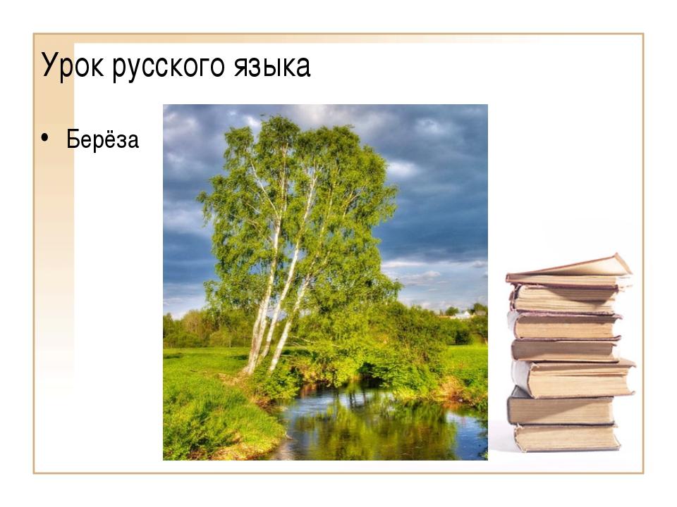 Урок русского языка Берёза (Образовательный портал «Мой университет» - www.mo...
