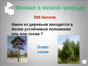 300 баллов Какое из деревьев находится в более устойчивом положении ель или
