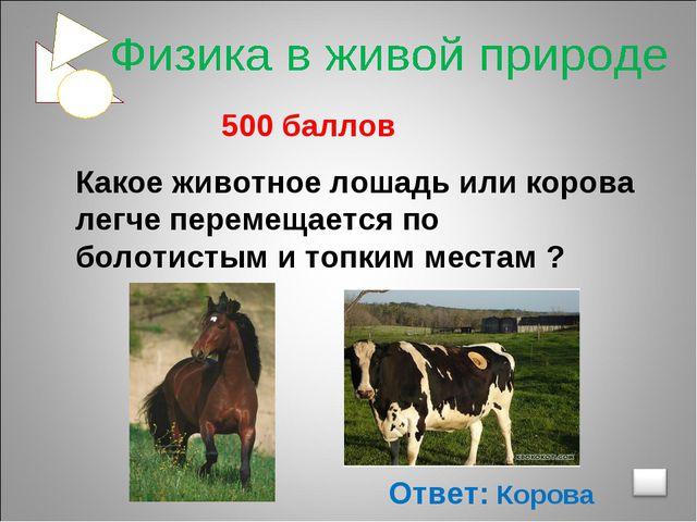500 баллов Какое животное лошадь или корова легче перемещается по болотистым...