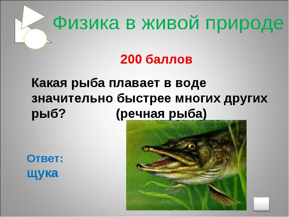 200 баллов Какая рыба плавает в воде значительно быстрее многих других рыб?...