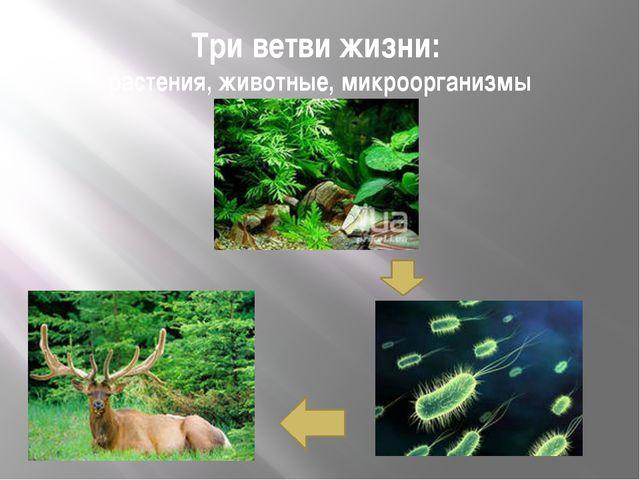 Три ветви жизни: растения, животные, микроорганизмы